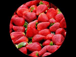 frische regionale Erdbeeren direkt vom Feld - regionaler Erdbeergenuss selbst gepflückt bei Erdbeeren Holzner