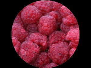 frische regionale Himbeeren direkt vom Feld - regionaler Himbeergenuss selbst gepflückt bei Erdbeeren Holzner